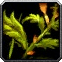 Bruiseweed Icon