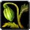 Khadgar's Whisker Icon