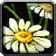 Peacebloom Icon