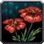 Rain Poppy Icon