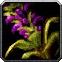 Wildvine Icon
