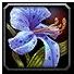 Talador Orchid Icon